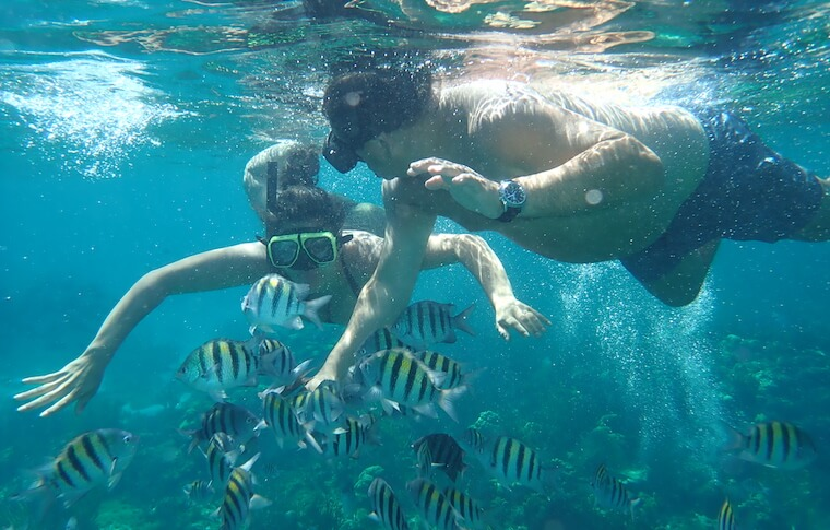Man and woman snorkeling near a school of yellow striped fish